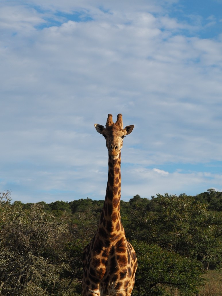 Zuid-Afrika tips